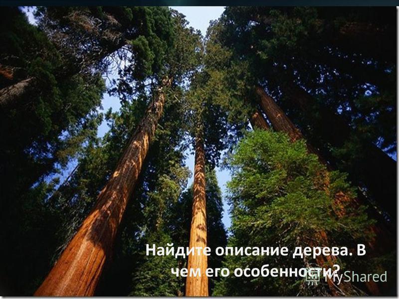 Найдите описание дерева. В чем его особенности?