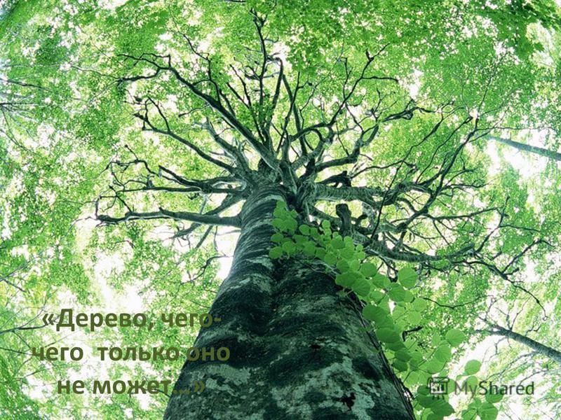 «Дерево, чего- чего только оно не может…»