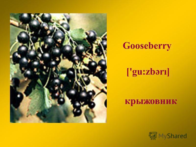 Gooseberry крыжовник ['gu:zbərı]