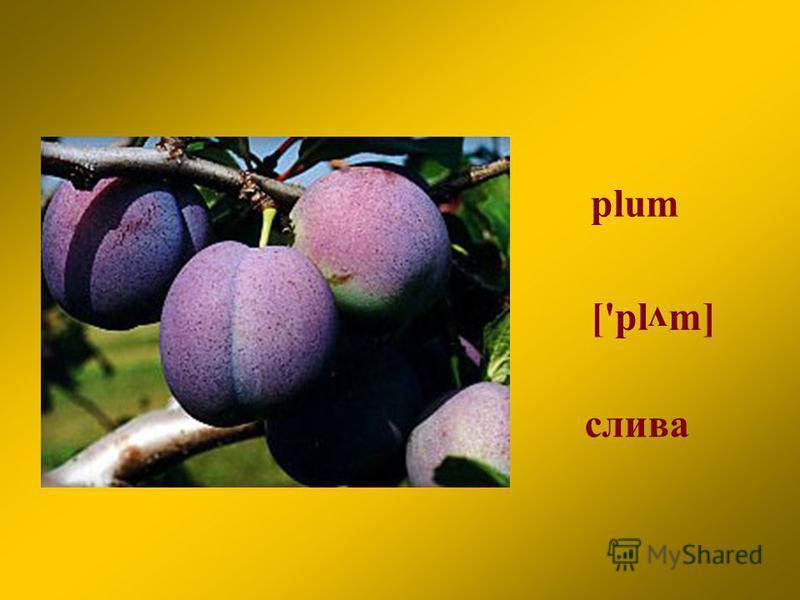 plum слива ['pl m] v
