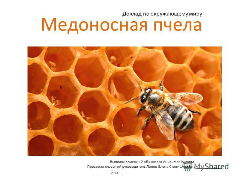 Медоносная пчела Доклад по окружающему миру Выполнил ученик 2 «Б» класса Анисимов Кирилл Проверил классный руководитель Лаппо Елена Станиславовна_____________ 2013