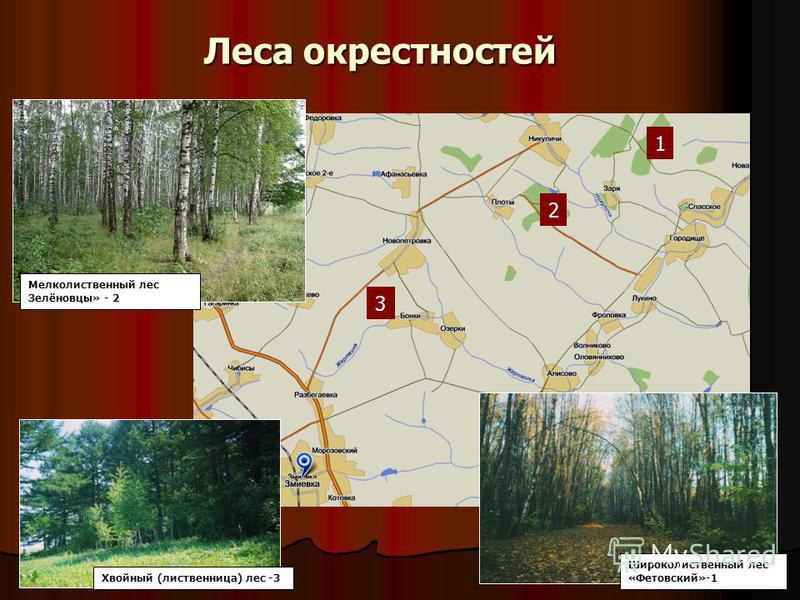 Леса окрестностей 1 2 3 Мелколиственный лес Зелёновцы» - 2 Хвойный (лиственница) лес -3 Широколиственный лес «Фетовский»-1