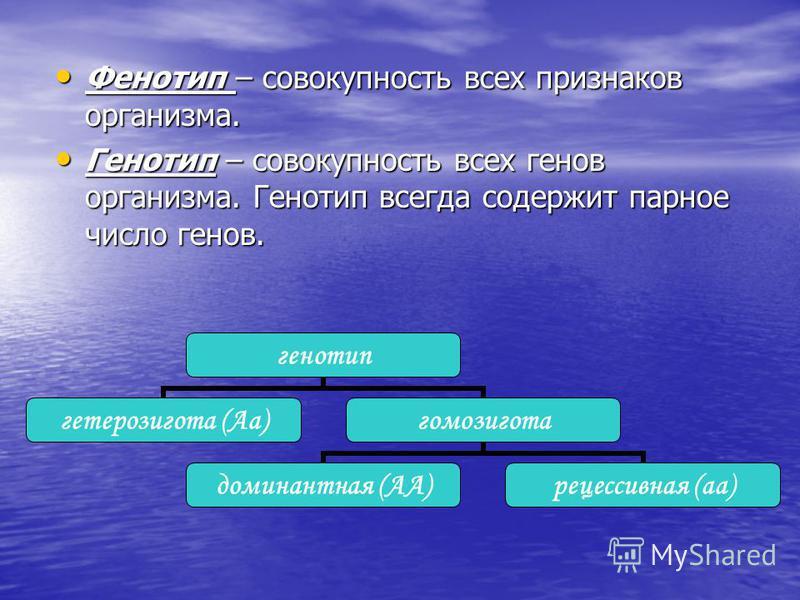 Фенотип – совокупность всех признаков организма. Фенотип – совокупность всех признаков организма. Генотип – совокупность всех генов организма. Генотип всегда содержит парное число генов. Генотип – совокупность всех генов организма. Генотип всегда сод