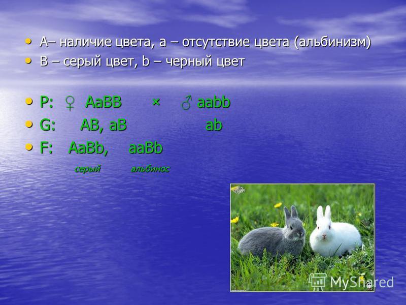 А– наличие цвета, a – отсутствие цвета (альбинизм) А– наличие цвета, a – отсутствие цвета (альбинизм) B – серый цвет, b – черный цвет B – серый цвет, b – черный цвет Р: АаВВ × ааbb Р: АаВВ × ааbb G: АВ, аВ аb G: АВ, аВ аb F: АаВb, ааВb F: АаВb, ааВb