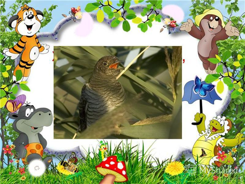 Хто гнізда свого не має, Яйця іншим підкидає, Та у лісі в холодку Все кує :Ку-ку! Ку-ку!