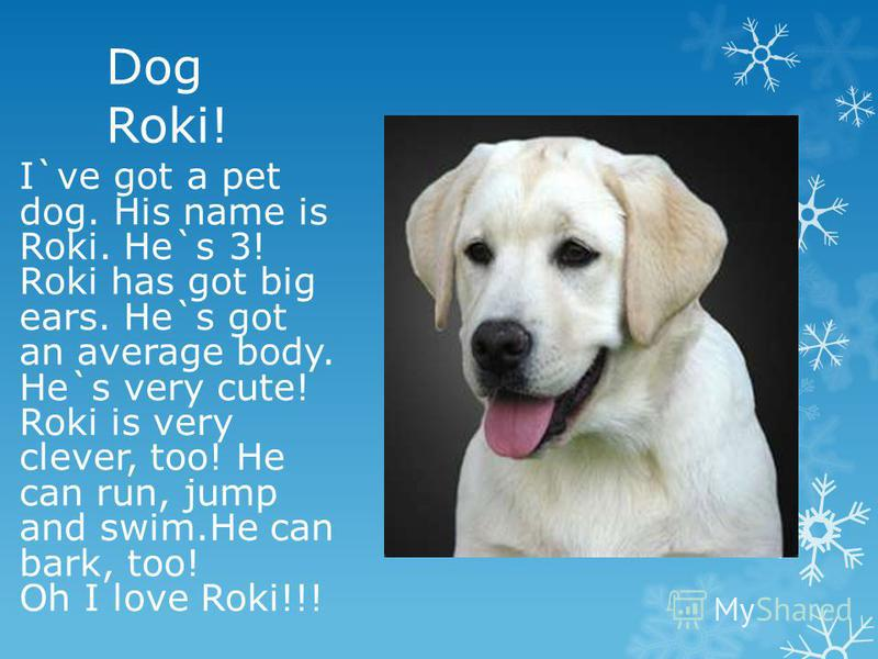 Dog Roki! I`ve got a pet dog. His name is Roki. He`s 3! Roki has got big ears. He`s got an average body. He`s very cute! Roki is very clever, too! He can run, jump and swim.He can bark, too! Oh I love Roki!!!