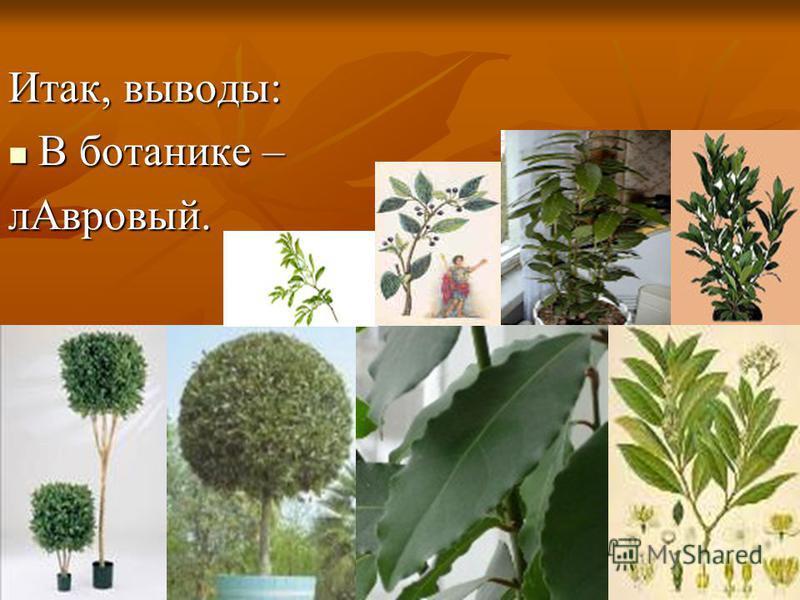 Итак, выводы: В ботанике – В ботанике –л Авровый.