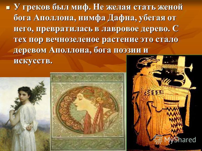 У греков был миф. Не желая стать женой бога Аполлона, нимфа Дафна, убегая от него, превратилась в лавравое дерево. С тех пор вечнозеленое растение это стало деревом Аполлона, бога поэзии и искусств. У греков был миф. Не желая стать женой бога Аполлон