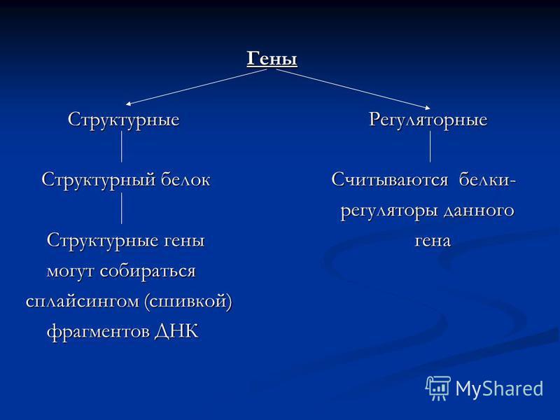 Гены Структурные Регуляторные Структурные Регуляторные Структурный белок Считываются белки- Структурный белок Считываются белки- регуляторы данного регуляторы данного Структурные гены гена Структурные гены гена могут собираться могут собираться сплай