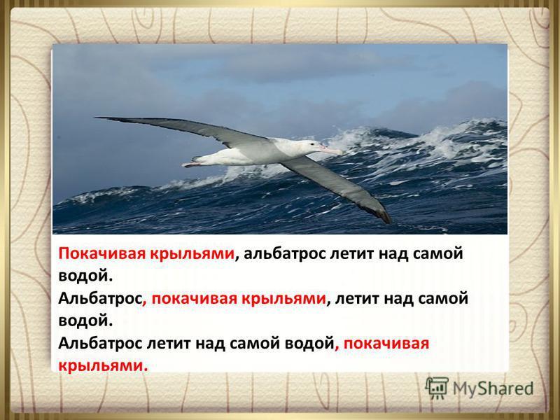 Покачивая крыльями, альбатрос летит над самой водой. Альбатрос, покачивая крыльями, летит над самой водой. Альбатрос летит над самой водой, покачивая крыльями.