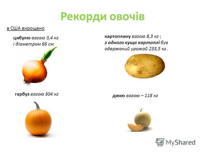 Рекорди овочів цибулю вагою 3,4 кг і діаметром 66 см картоплину вагою 8,3 кг ; з одного куща картоплі був одержаний урожай 233,5 кг. гарбуз вагою 304 кг диню вагою – 118 кг в США вирощено