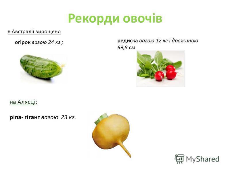 Рекорди овочів в Австралії вирощено огірок вагою 24 кг ; редиска вагою 12 кг і довжиною 69,8 см на Алясці: ріпа- гігант вагою 23 кг.
