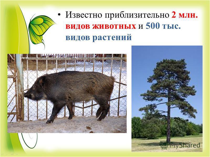 Известно приблизительно 2 млн. видов животных и 500 тыс. видов растений