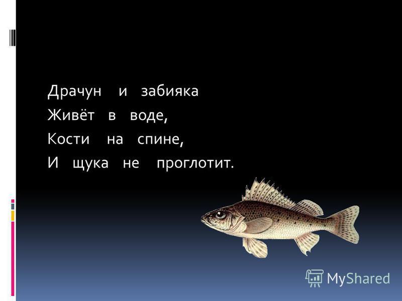 Драчун и забияка Живёт в воде, Кости на спине, И щука не проглотит.