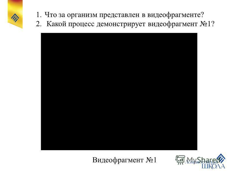 1. Что за организм представлен в видеофрагменте? 2. Какой процесс демонстрирует видеофрагмент 1? Видеофрагмент 1
