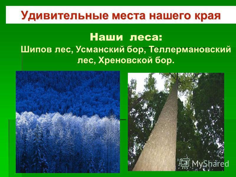 Удивительные места нашего края Наши леса: Шипов лес, Усманский бор, Теллермановский лес, Хреновской бор.