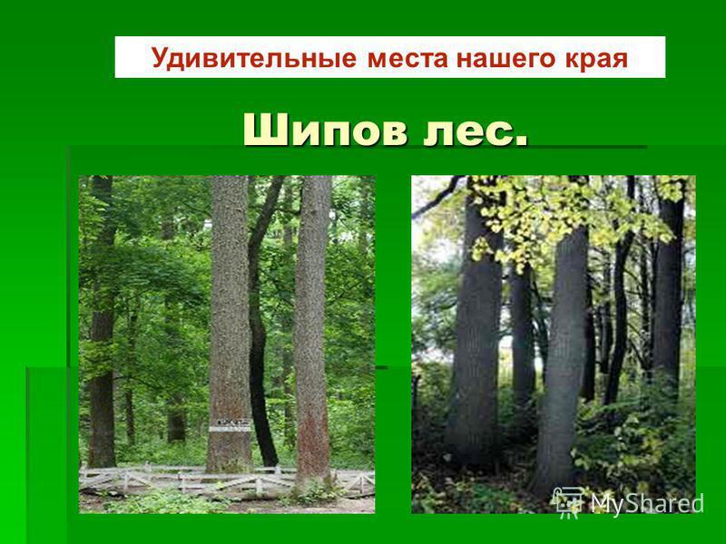 Шипов лес. Удивительные места нашего края