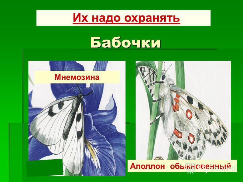 Бабочки Их надо охранять Мнемозина надо охранять Аполлон обыкновенный