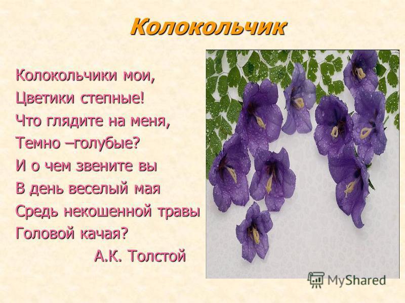 Колокольчик Колокольчики мои, Цветики степные! Что глядите на меня, Темно –голубые? И о чем звените вы В день веселый мая Средь некошеной травы Головой качая? А.К. Толстой А.К. Толстой