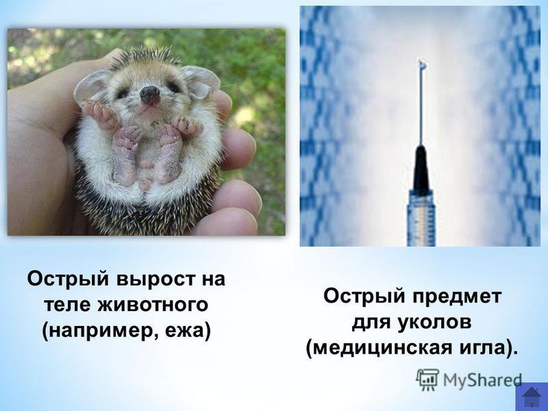 Острый вырост на теле животного (например, ежа) Острый предмет для уколов (медицинская игла).