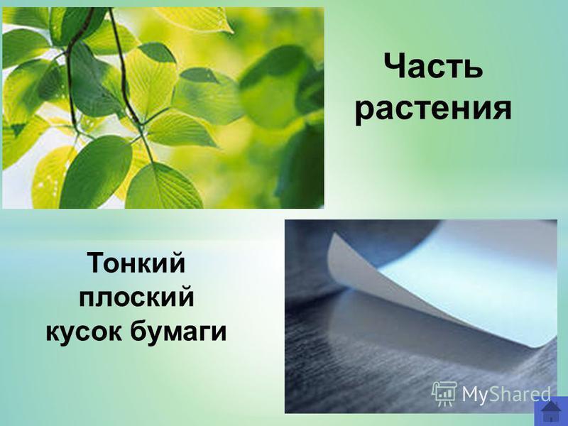 Часть растения Тонкий плоский кусок бумаги