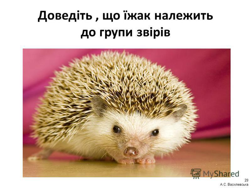 Доведіть, що їжак належить до групи звірів 29 А.С. Василевська