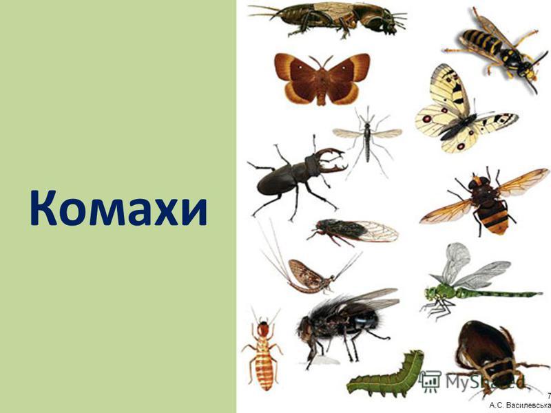 Комахи 7 А.С. Василевська