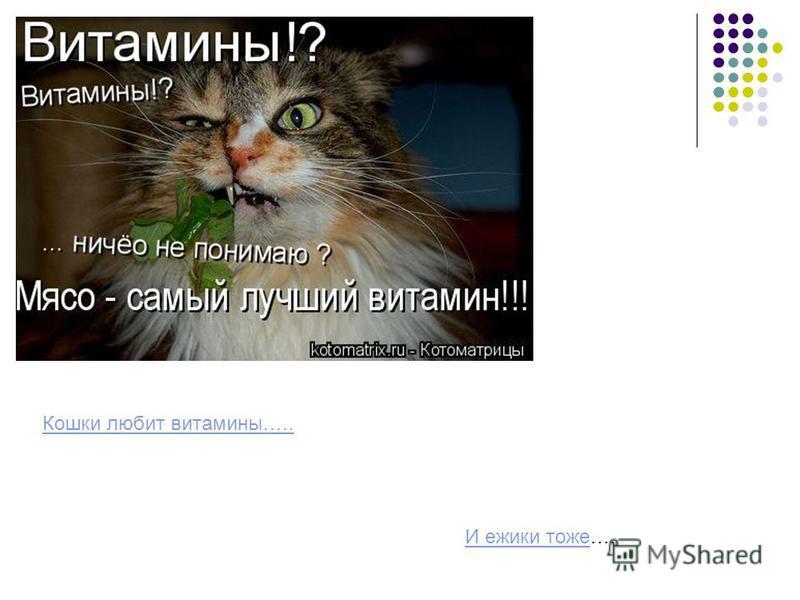 Кошки любит витамины….. И ежики тожеИ ежики тоже….