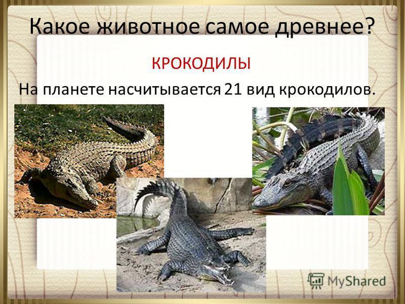 Какое животное самое древнее? КРОКОДИЛЫ На планете насчитывается 21 вид крокодилов.