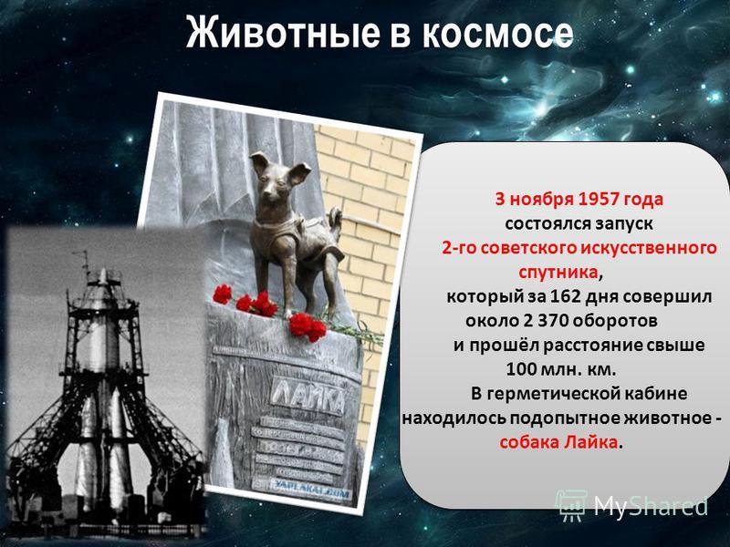 Животные в космосе 3 ноября 1957 года состоялся запуск 2-го советского искусственного спутника, который за 162 дня совершил около 2 370 оборотов и прошёл расстояние свыше 100 млн. км. В герметической кабине находилось подопытное животное - собака Лай