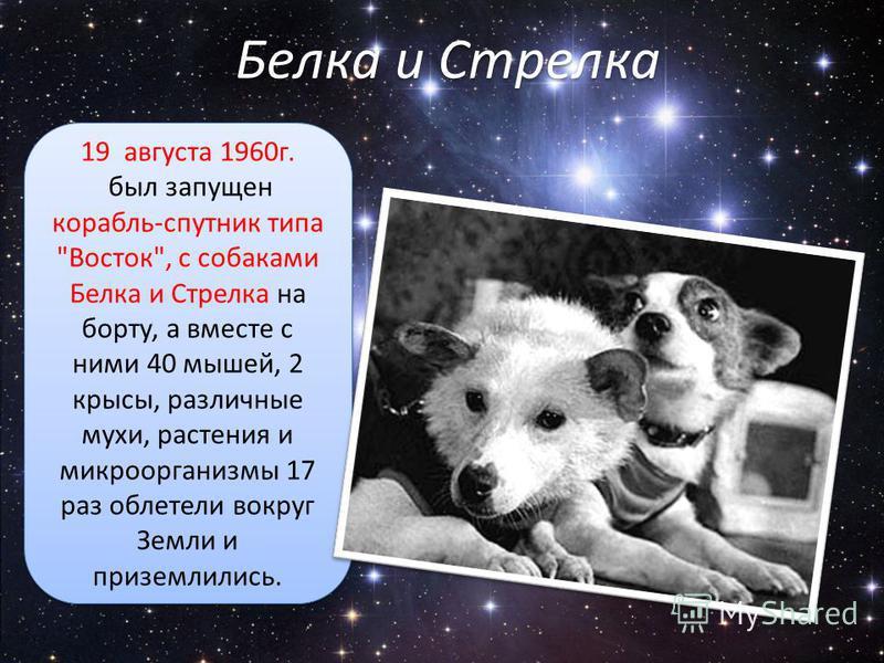 Белка и Стрелка 19 августа 1960 г. был запущен корабль-спутник типа