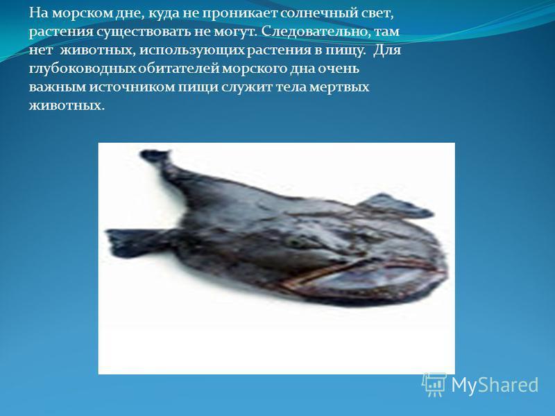 Все морские живые организмы так или иначе связаны друг с другом. В морях и океанах обитает множество разнообразных животных от простейших до млекопитающих. разнообразных животных млекопитающих