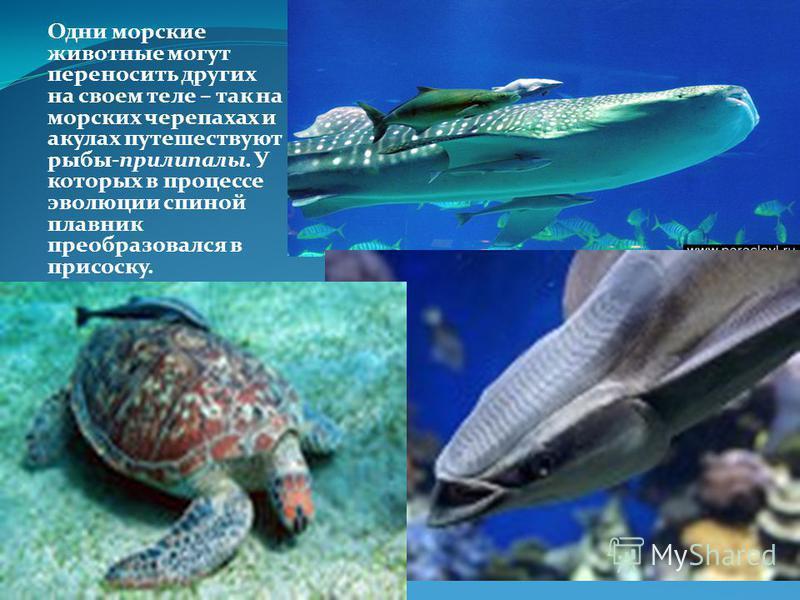 На морском дне, куда не проникает солнечный свет, растения существовать не могут. Следовательно, там нет животных, использующих растения в пищу. Для глубоководных обитателей морского дна очень важным источником пищи служит тела мертвых животных.