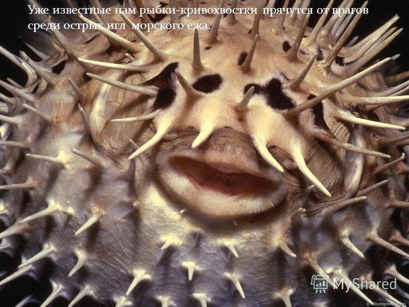 Известны взаимовыгодные отношения между различными рыбами. Так, мелкие рыбки- чистильщики избавляют от кожных паразитов крупных хищных рыб. Они не только собирают паразитов, но и обрабатывают зубастый рот своих(пациентов )