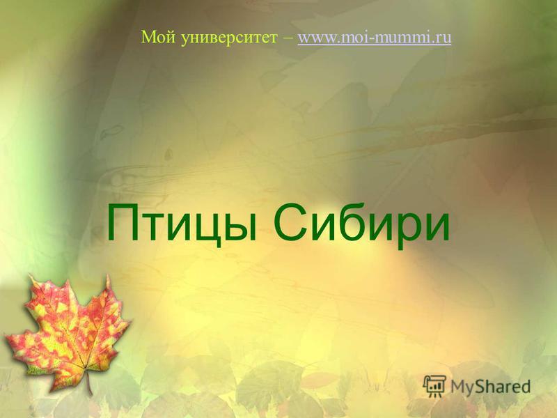 Птицы Сибири Мой университет – www.moi-mummi.ruwww.moi-mummi.ru