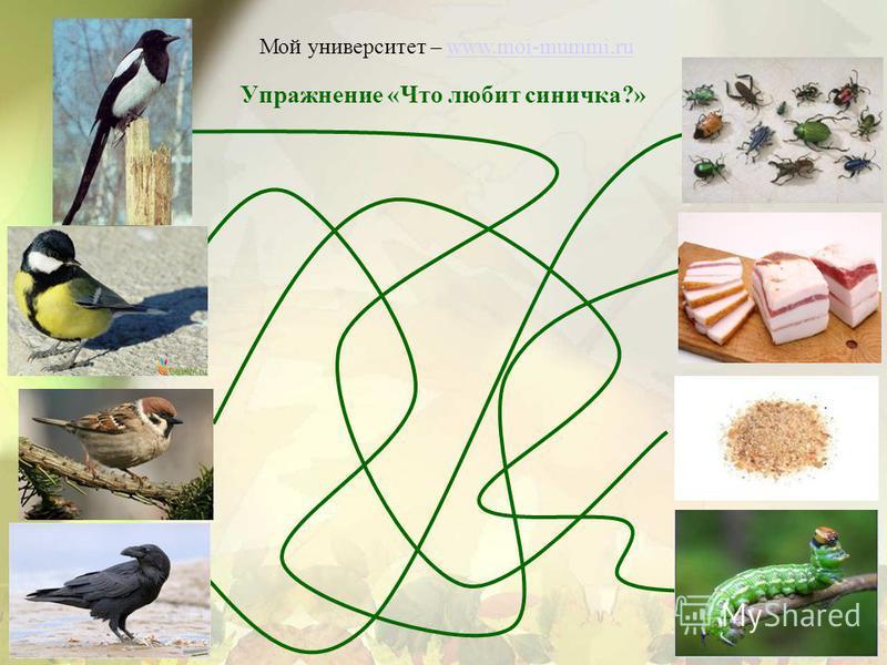Упражнение «Что любит синичка?» Мой университет – www.moi-mummi.ruwww.moi-mummi.ru