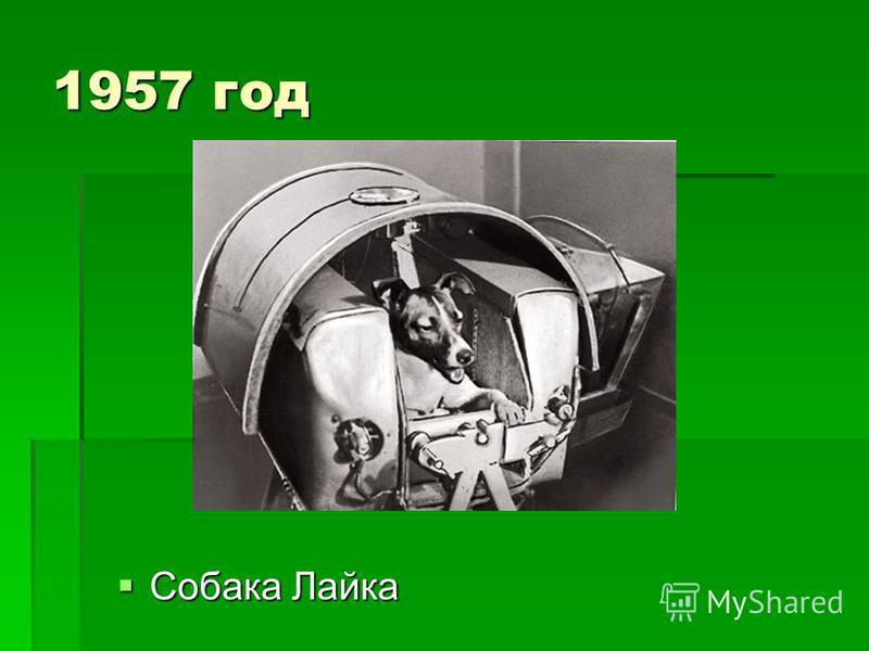 1957 год Собака Лайка Собака Лайка
