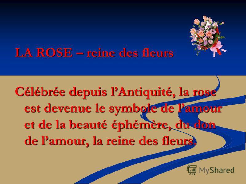 LA ROSE – reine des fleurs Célébrée depuis lAntiquité, la rose est devenue le symbole de lamour et de la beauté éphémère, du don de lamour, la reine des fleurs.