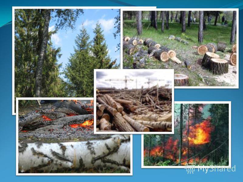 За последние 200 лет площадь лесов сократилась в 2 раза. Обезлесение происходит со скоростью 20 млн. га в год. Особенно в Африке, Бразилии, Камеруне, Коста-Рике, Индии, Индонезии, Филиппинах, Таиланде, Вьетнаме,Малайзии, Ямайке, Гаити, Сальвадоре, Ко