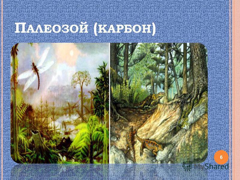 П АЛЕОЗОЙ ( КАРБОН ) 6