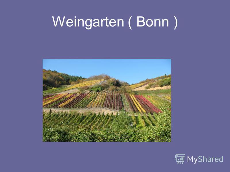 Weingarten ( Bonn )