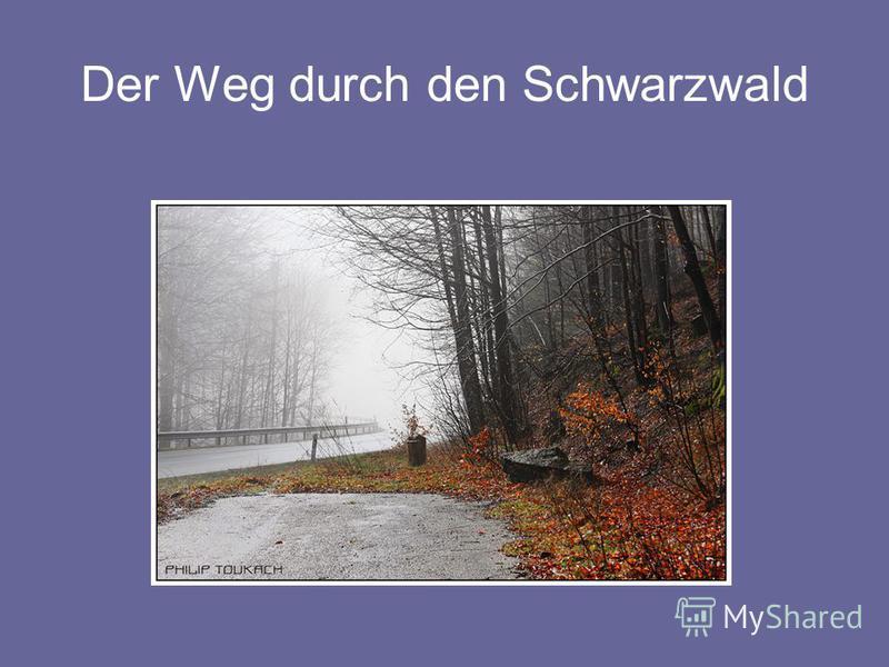 Der Weg durch den Schwarzwald