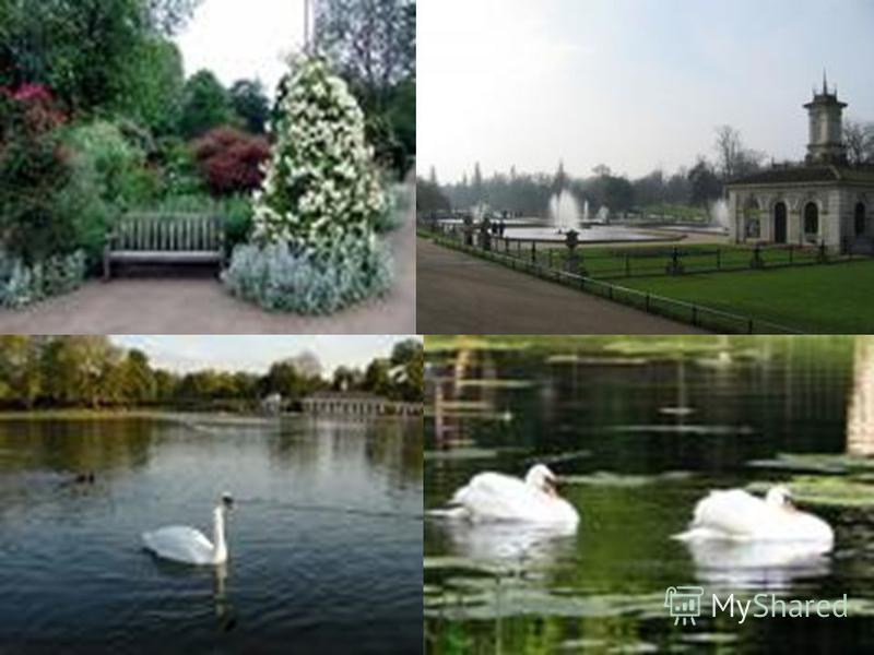 Hyde Park Is one of the most popular parks in London. It includes (включает в себя) Kensington Gardens. It has the most attractive lake(самое красивое озеро) – Serpantine.