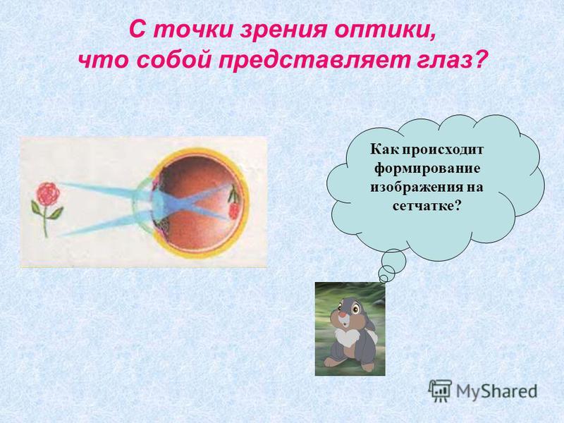 С точки зрения оптики, что собой представляет глаз? Как происходит формирование изображения на сетчатке?