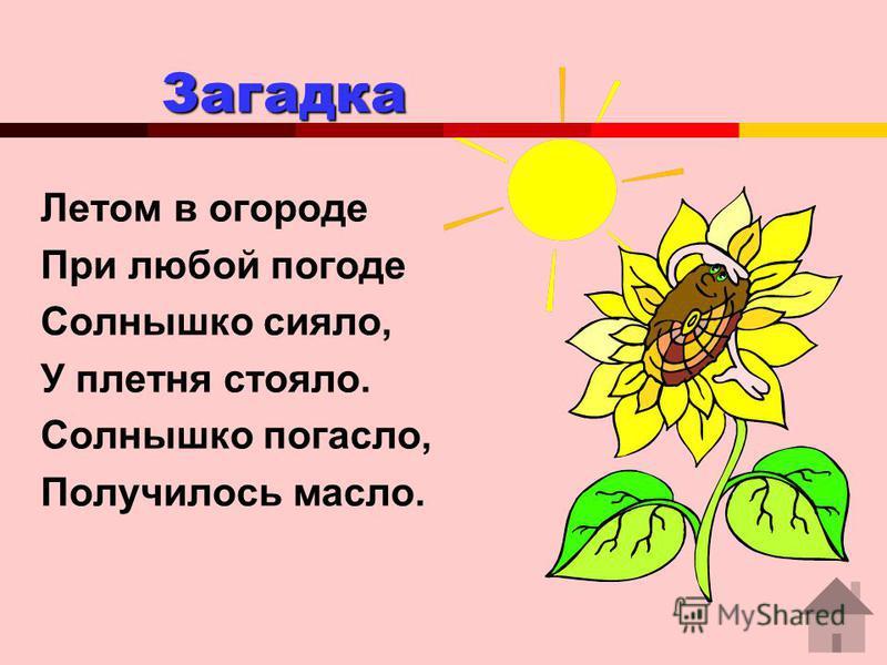 Загадка Загадка Летом в огороде При любой погоде Солнышко сияло, У плетня стояло. Солнышко погасло, Получилось масло.
