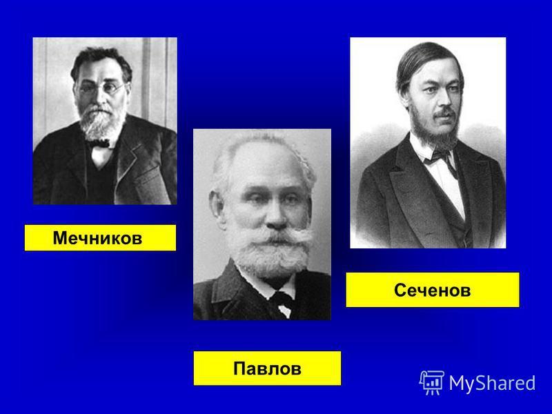 Павлов Мечников Сеченов