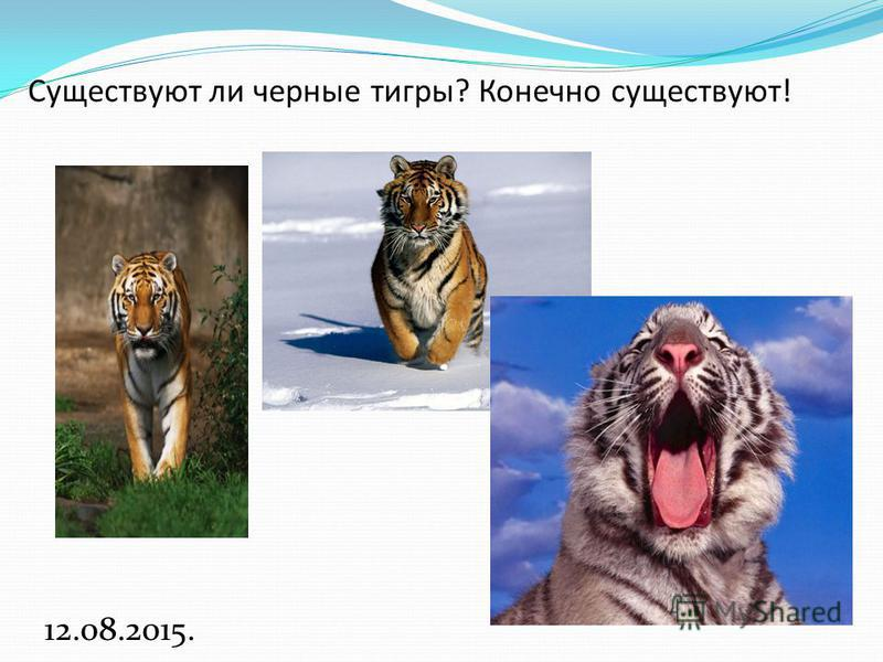 Существуют ли черные тигры? Конечно существуют! 12.08.2015.