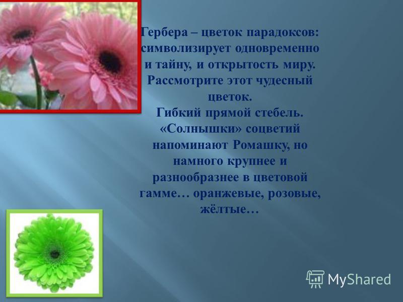 Гербера – цветок парадоксов : символизирует одновременно и тайну, и открытость миру. Рассмотрите этот чудесный цветок. Гибкий прямой стебель. « Солнышки » соцветий напоминают Ромашку, но намного крупнее и разнообразнее в цветовой гамме … оранжевые, р