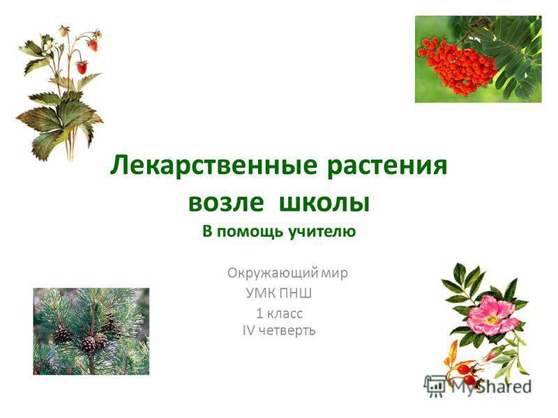 Лекарственные растения возле школы В помощь учителю Окружающий мир УМК ПНШ 1 класс IV четверть