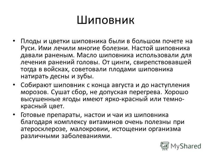 Плоды и цветки шиповника были в большом почете на Руси. Ими лечили многие болезни. Настой шиповника давали раненым. Масло шиповника использовали для лечения ранений головы. От цинги, свирепствовавшей тогда в войсках, советовали плодами шиповника нати